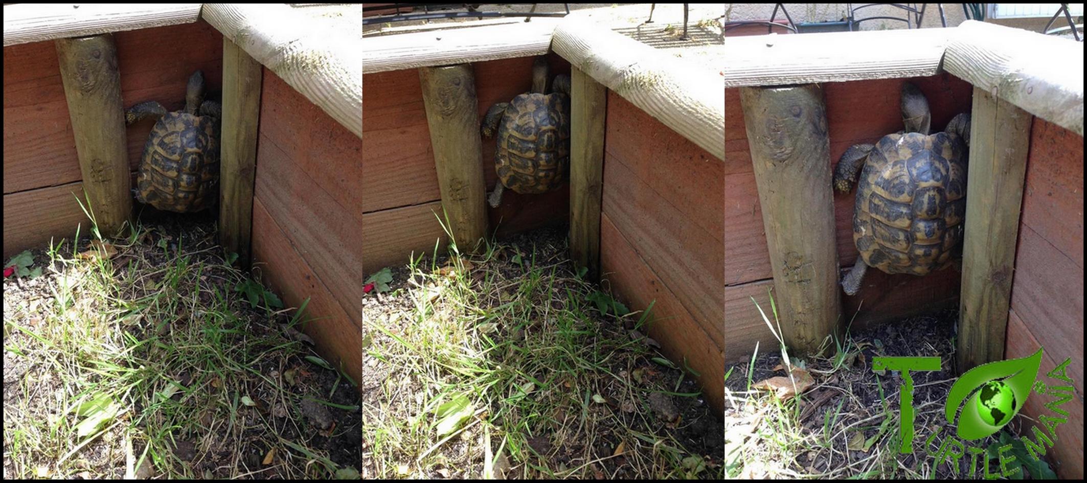 Turtle Mania Création Enclos Parc Tortues De Terre
